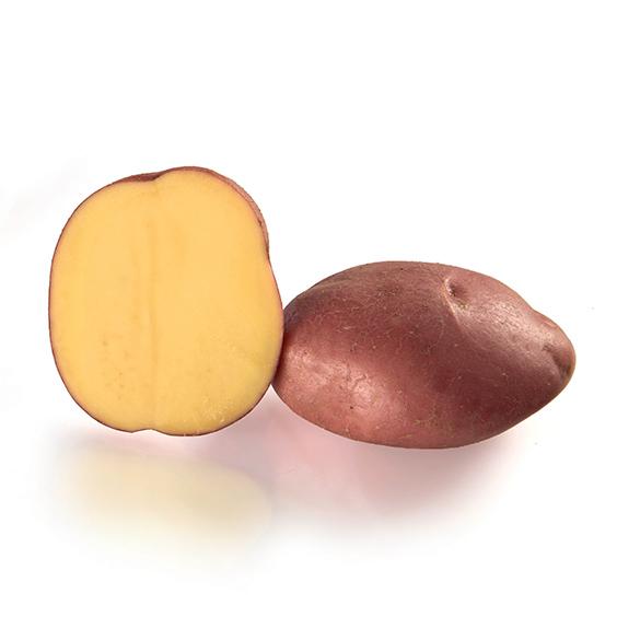 Variété de pomme de terre STEMSTER