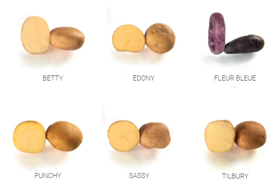 Variétés Chips