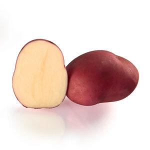 Variété de pomme de terre RED MAGIC