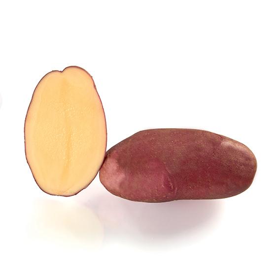 Variété de pomme de terre ROSANNA