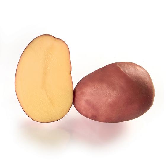 Variété de pomme de terre YONA