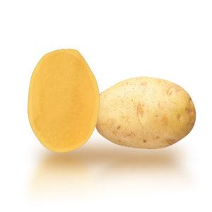 Variété de pomme de terre PAMINA