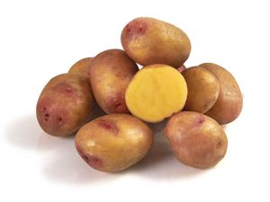 Pomme de terre Catimini