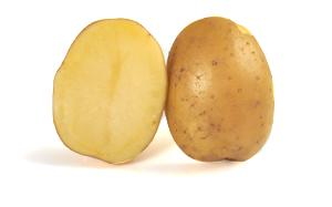 Pomme de terre Decibel