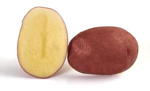 Pomme de terre Topaze