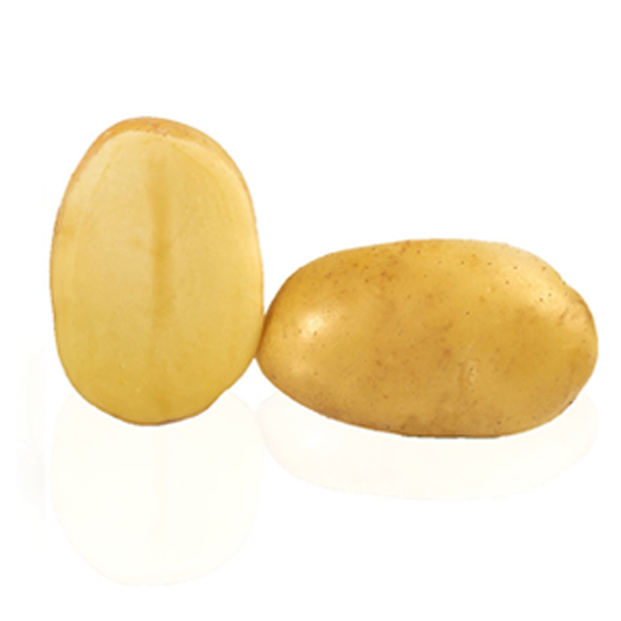 Variété de pomme de terre ALIX