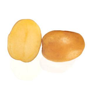 Variété de pomme de terre DECIBEL