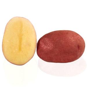 Variété de pomme de terre TOPAZE
