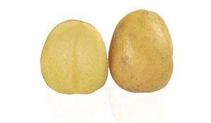 Pomme de terre EMPRESS