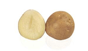 Pomme de terre Telma