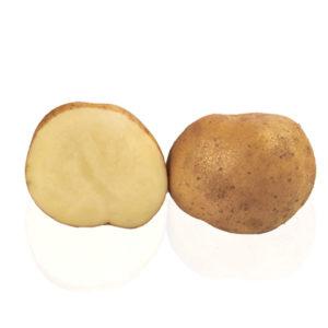Variété de pomme de terre ELAIA