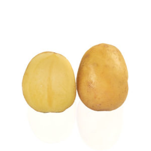 Variété de pomme de terre EMPRESS