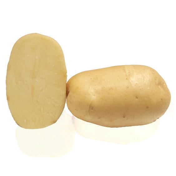 Variété de pomme de terre FASTY