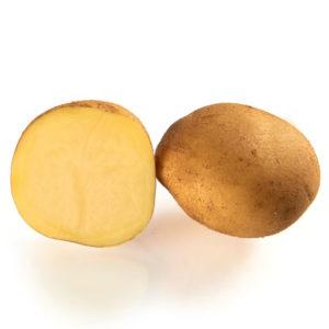 Variété de pomme de terre PUNCHY