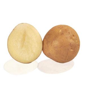 Variété de pomme de terre TELMA