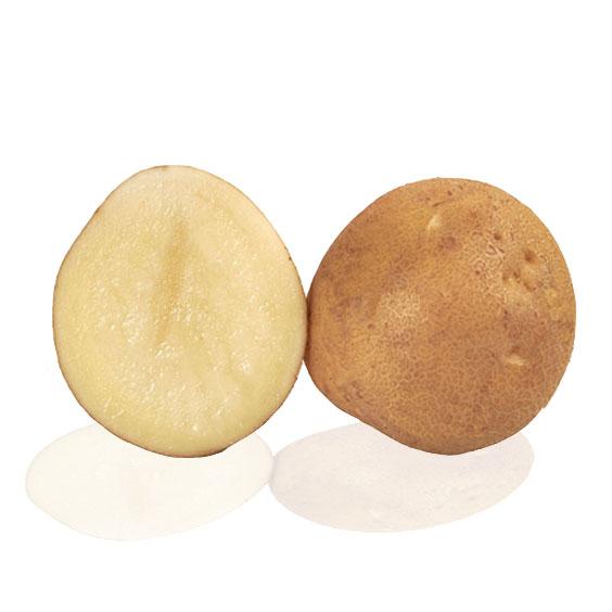 Variété de pomme de terre TELMA pour fécule